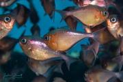 Curacao_2020-12-11_13-03-54