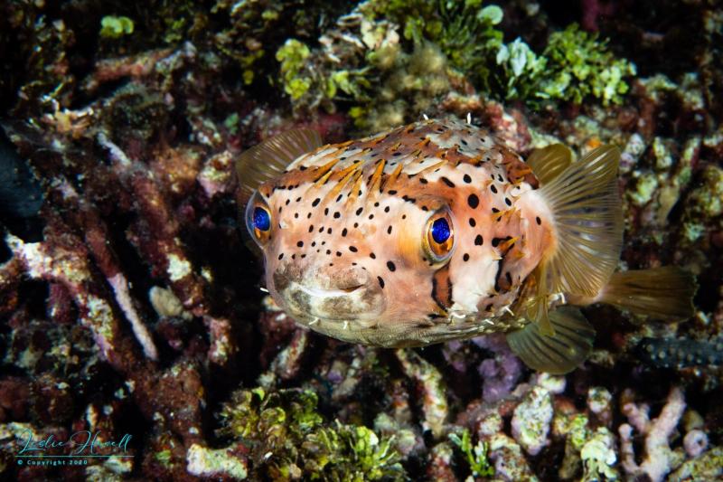 Curacao_2021-01-10_18-54-21