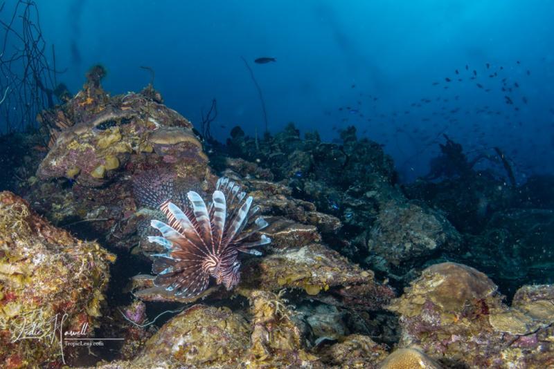 Bonaire_2021-05-21_16-35-25