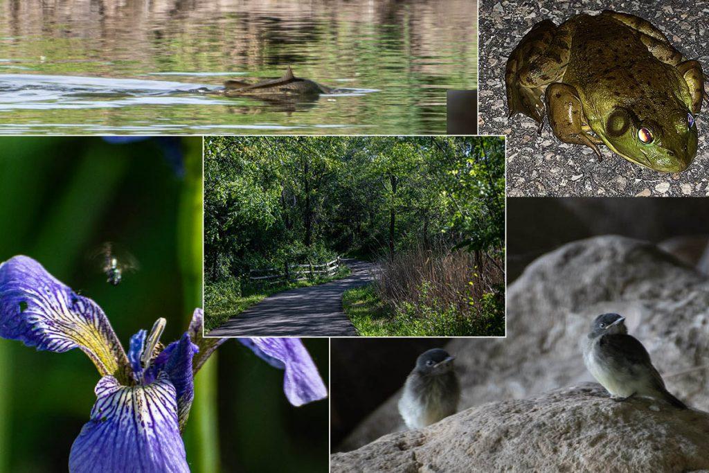 Warrenville Wildlife