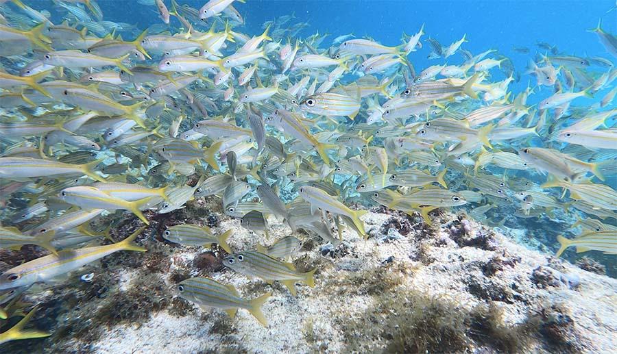 Fish at Tres Trapi
