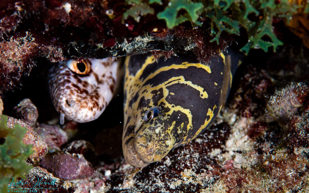 Aruba: Best of Shore Dives