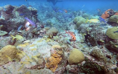 Our Fourth Shore Diving Video