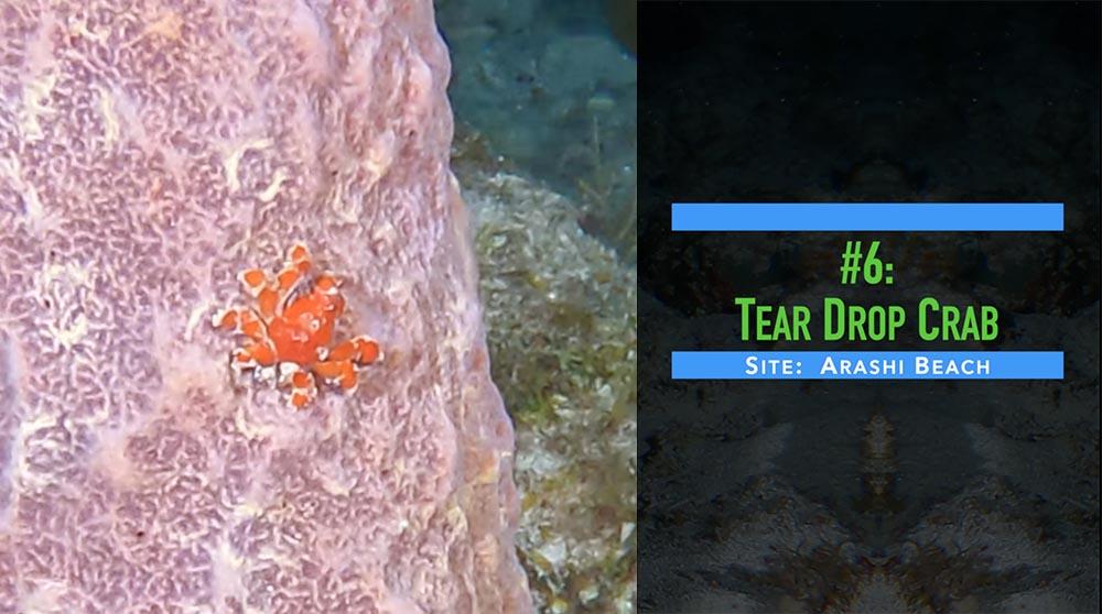 Last Best Diving In Aruba Video